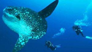 Bali Safari plongée et découverte de l'île des Dieux