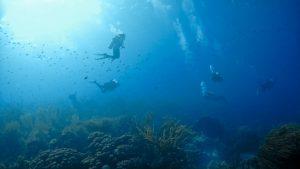 Plonger à Bonaire avec Dive-Shop.ch