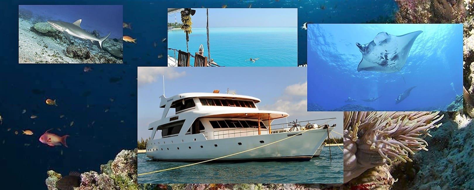 Moonima aux Maldives. Croisière plongée à bord d'un bateau confortable