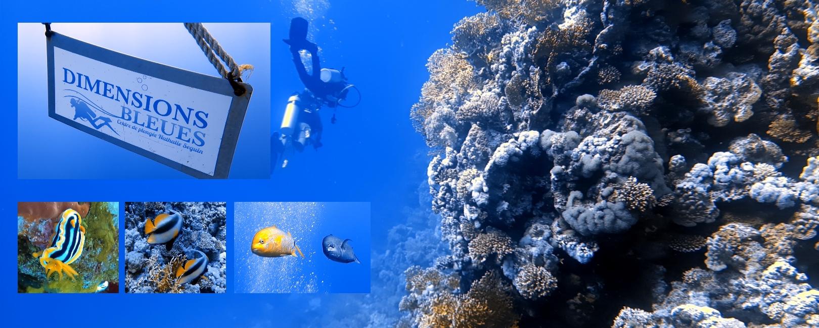 Centre de plongée en Egypte - les plus belles plongées de Safaga. Sécurité et convivialité : chez Dimensions Bleues